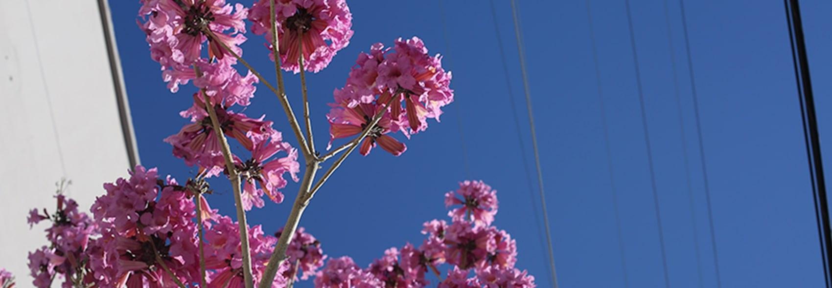 Plumper skin pink flower