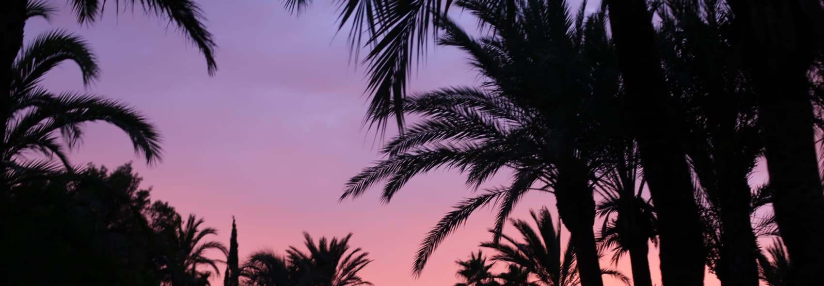 Img2 2x Palm Trees